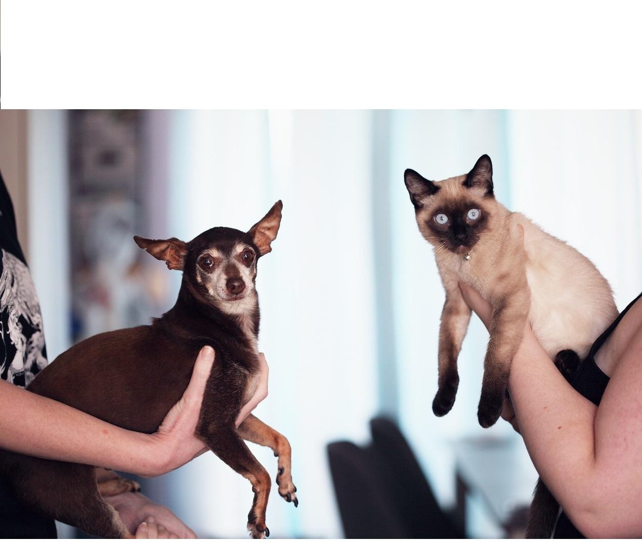 Ein Katzen- oder Hunde-Behaviorist hat die anspruchsvolle Aufgabe, Menschen und Tiere zusammenzubringen.