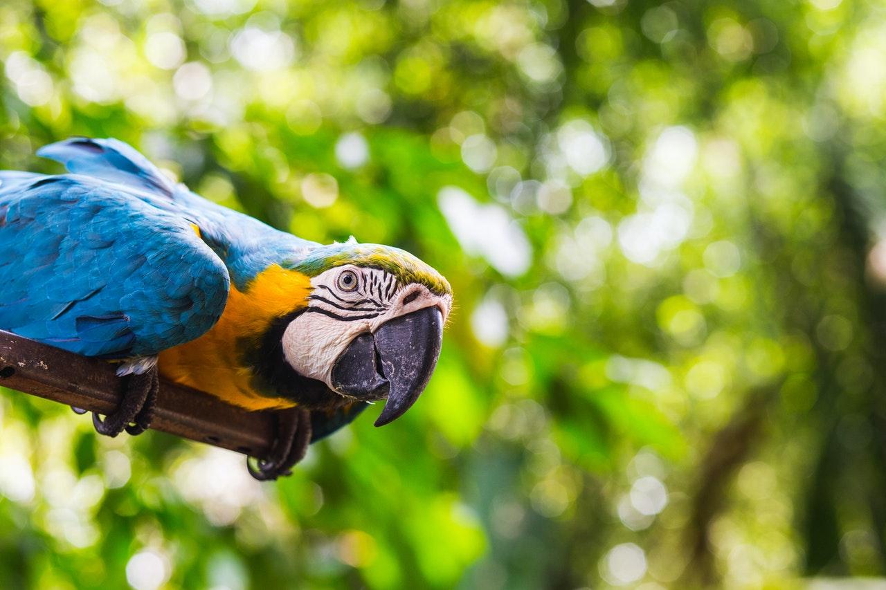Ara Papagei - wie sieht er aus?