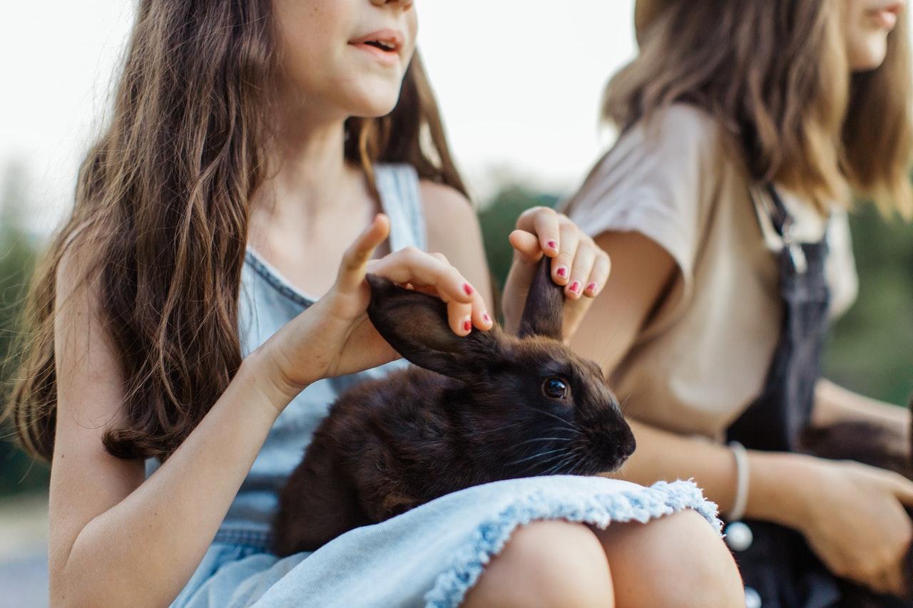 Wie pflegt man das Fell von einem Kaninchen?