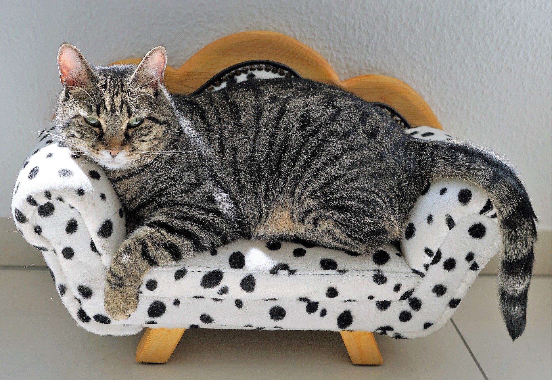 Was sind die größten Katzen der Welt?