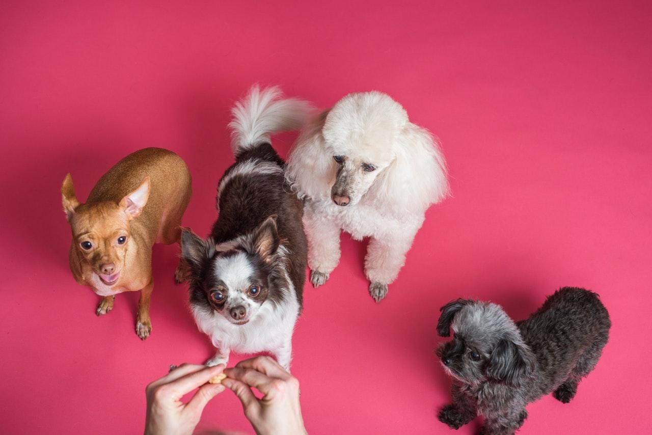 Träumen Sie davon, ein Haustier in einem Mehrfamilienhaus zu haben?