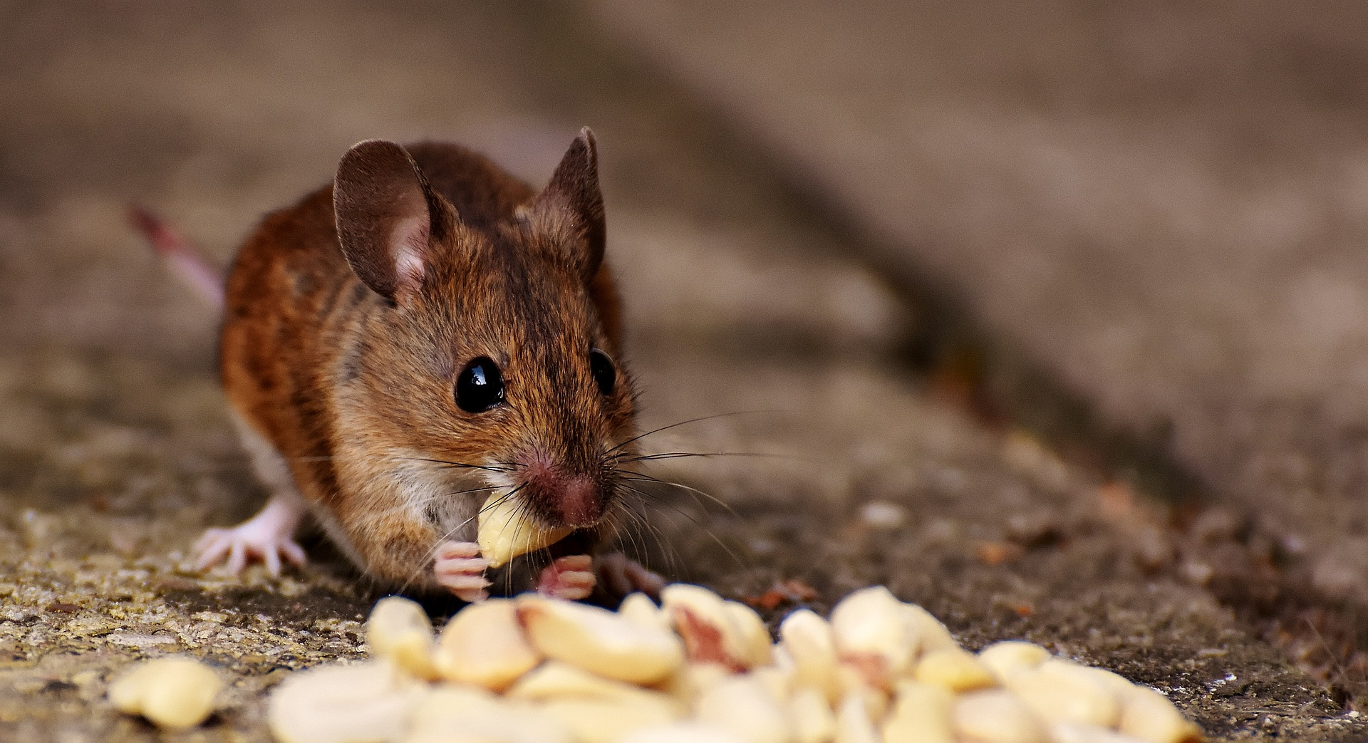 Wie ist der richtige Käfig für eine Maus?