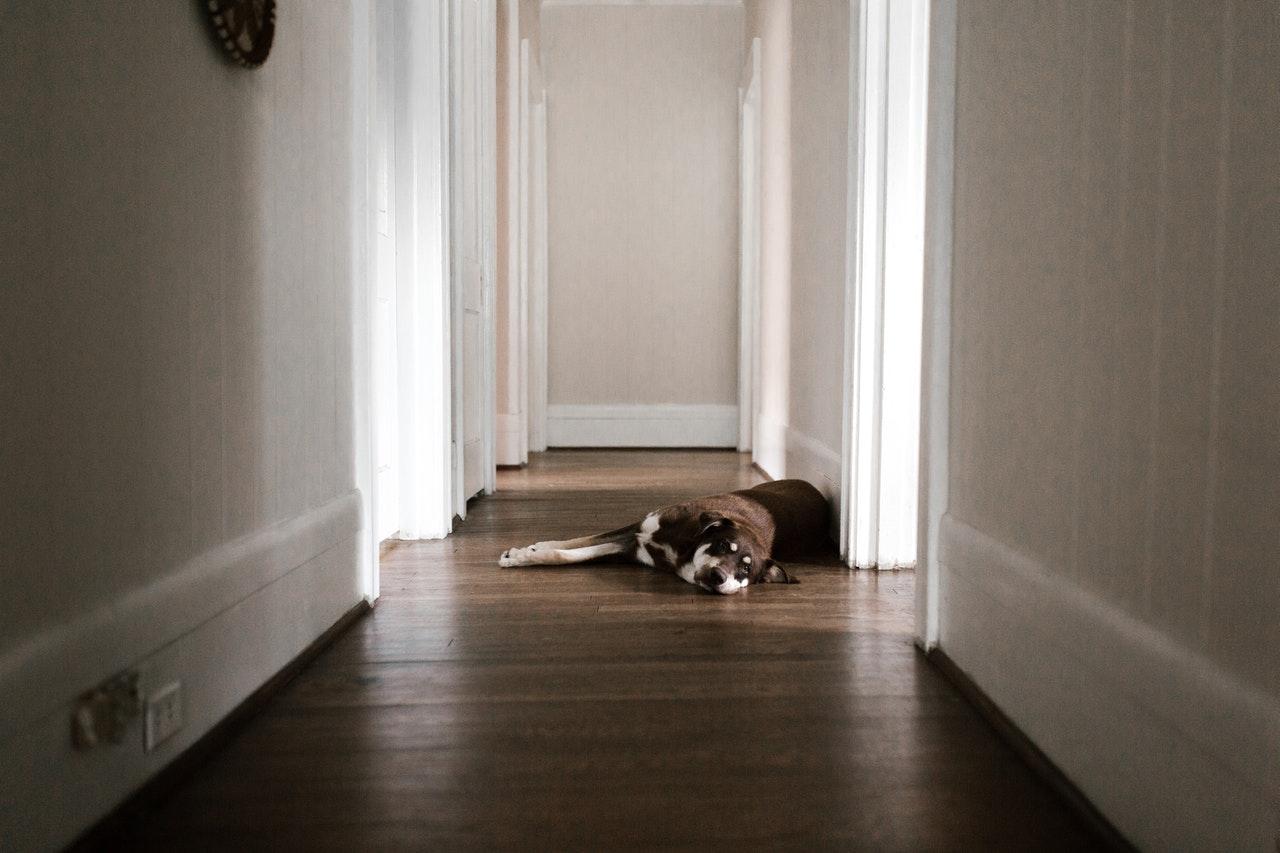 Lohnt es sich, meinem Hund beizubringen, sich zu Hause zu erleichtern?