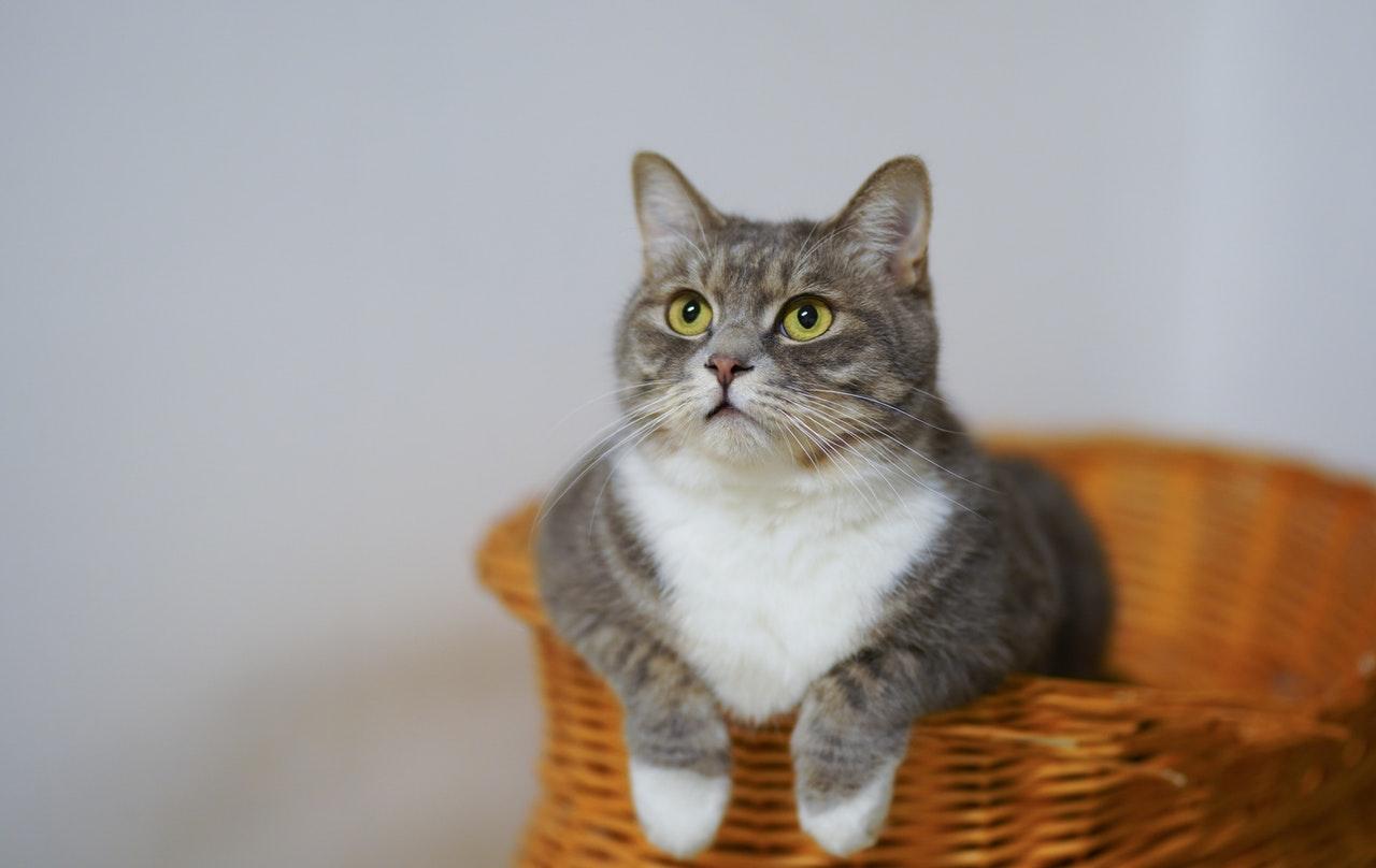 Kater oder Katze...Unterschiede zeigen sich nicht nur in der Struktur der Genitalien, sondern auch im allgemeinen Aussehen und Verhalten der Tiere.