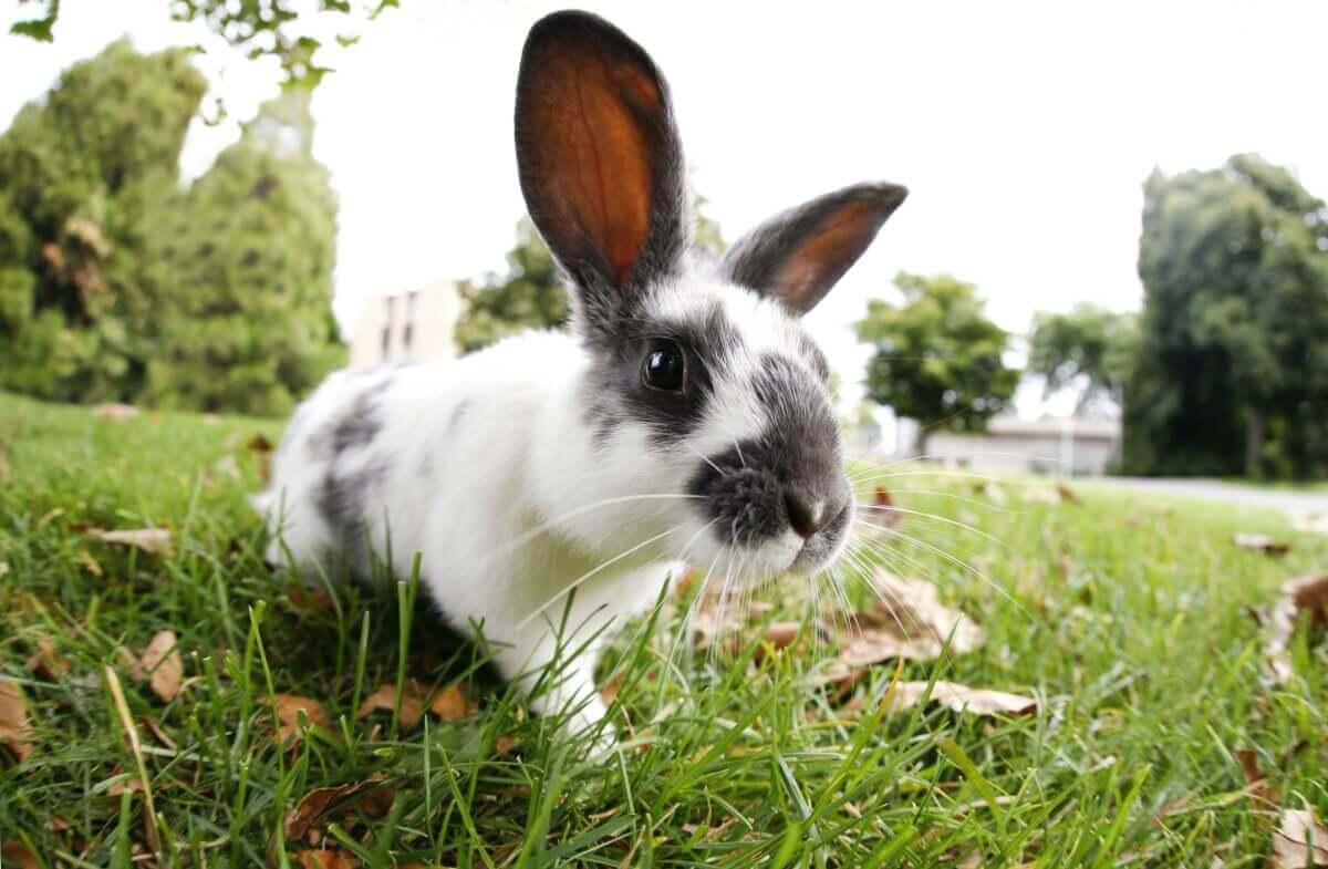 Welches Heu für das Kaninchen?
