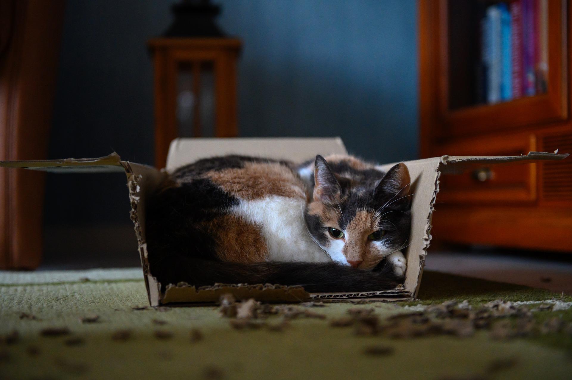 Sie sollten Ihre Katze genauer beobachten. Entscheidend ist vor allem die Dauer des Durchfalls und das Allgemeinbefinden.