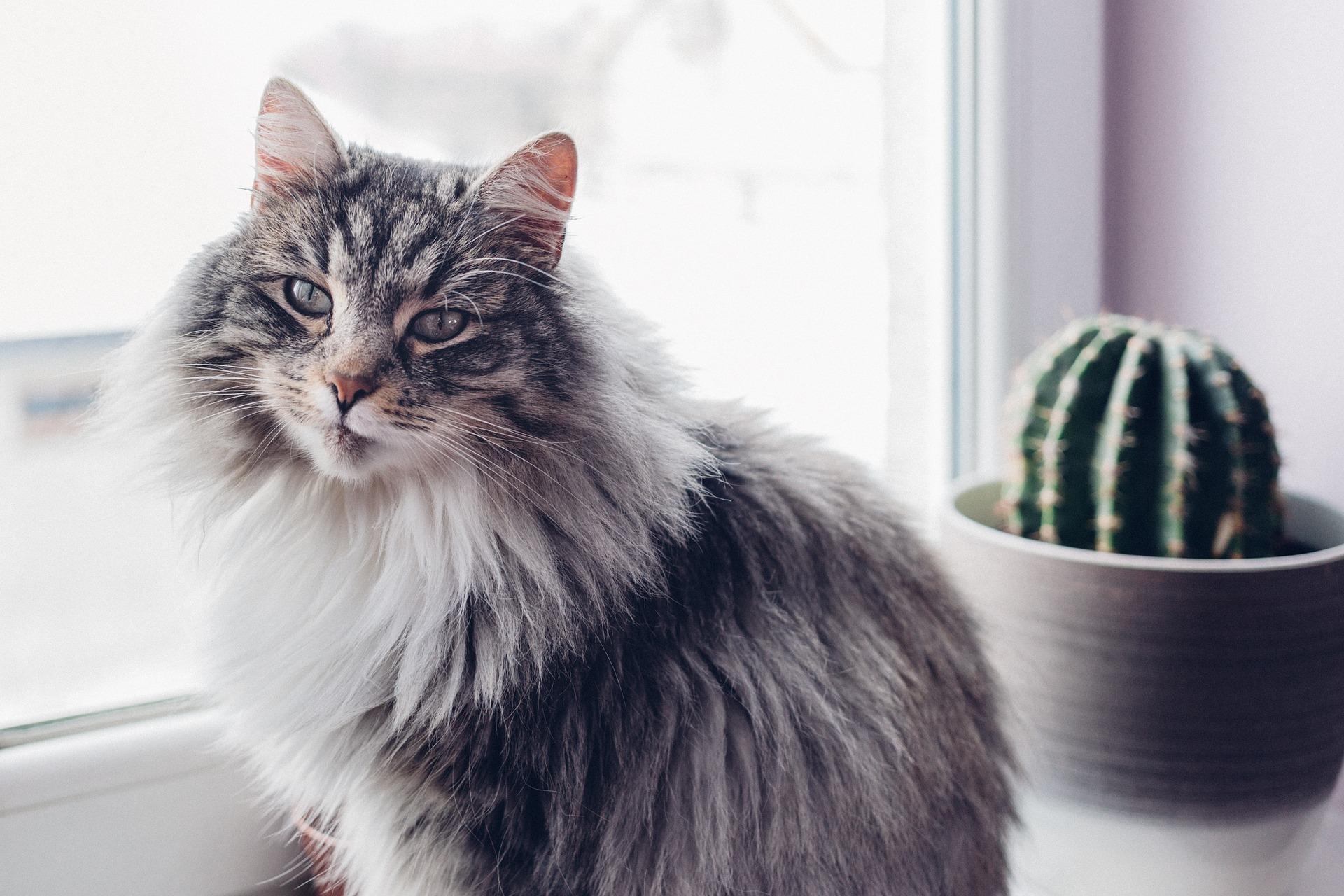 Wenn wir diese Möglichkeit haben, ist es normalerweise am besten, die Katze zu Hause in der Obhut der Familie oder von Freunden zu lassen.