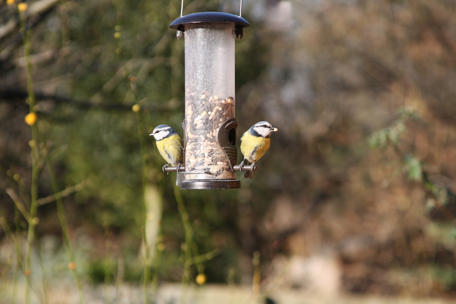 Das Füttern von Vögeln zur Winterzeit hat nicht nur in Deutschland eine lange Tradition.