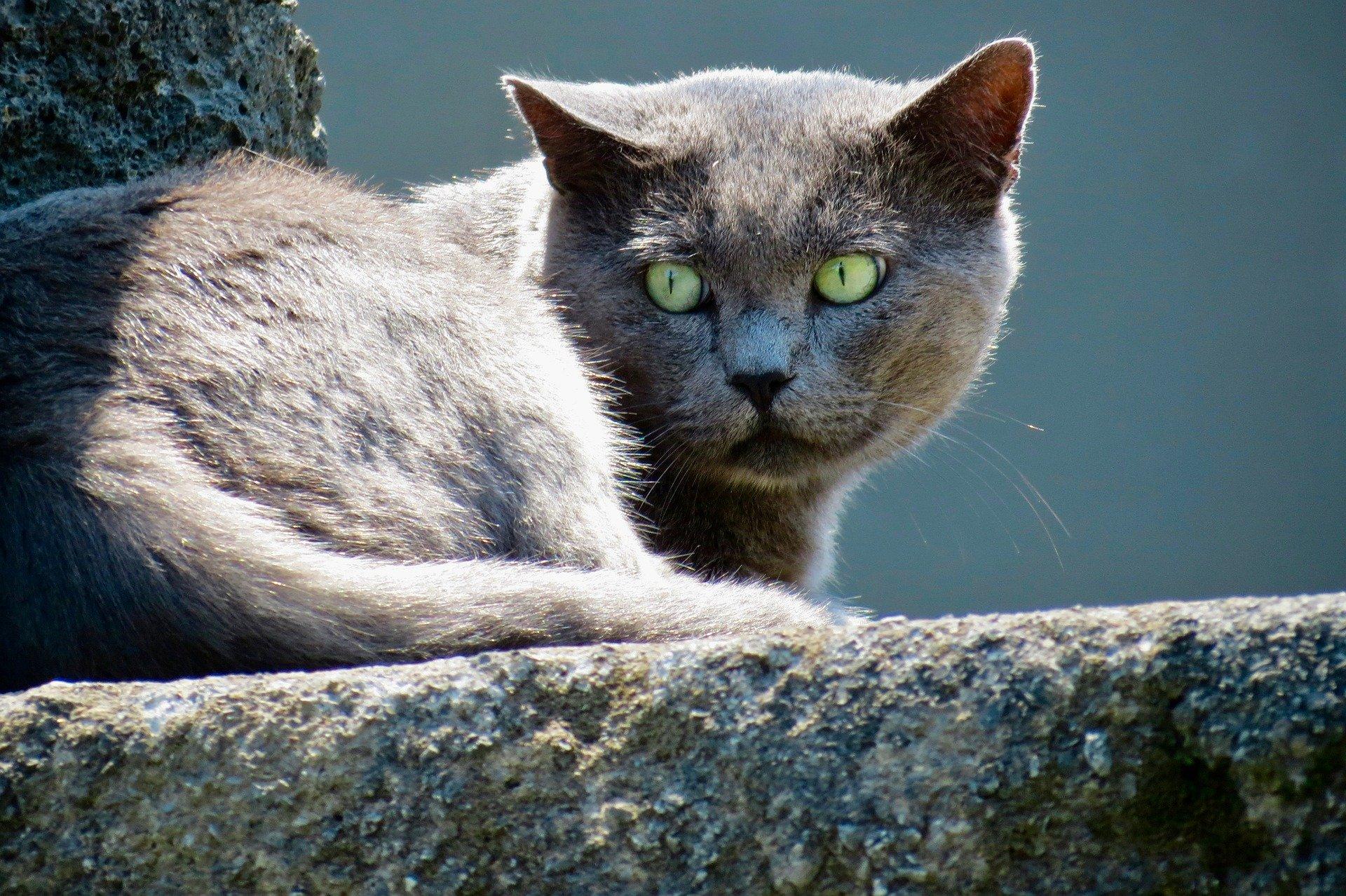 Katzen als Raubtiere können keine Stress- oder Krankheitssymptome zeigen.