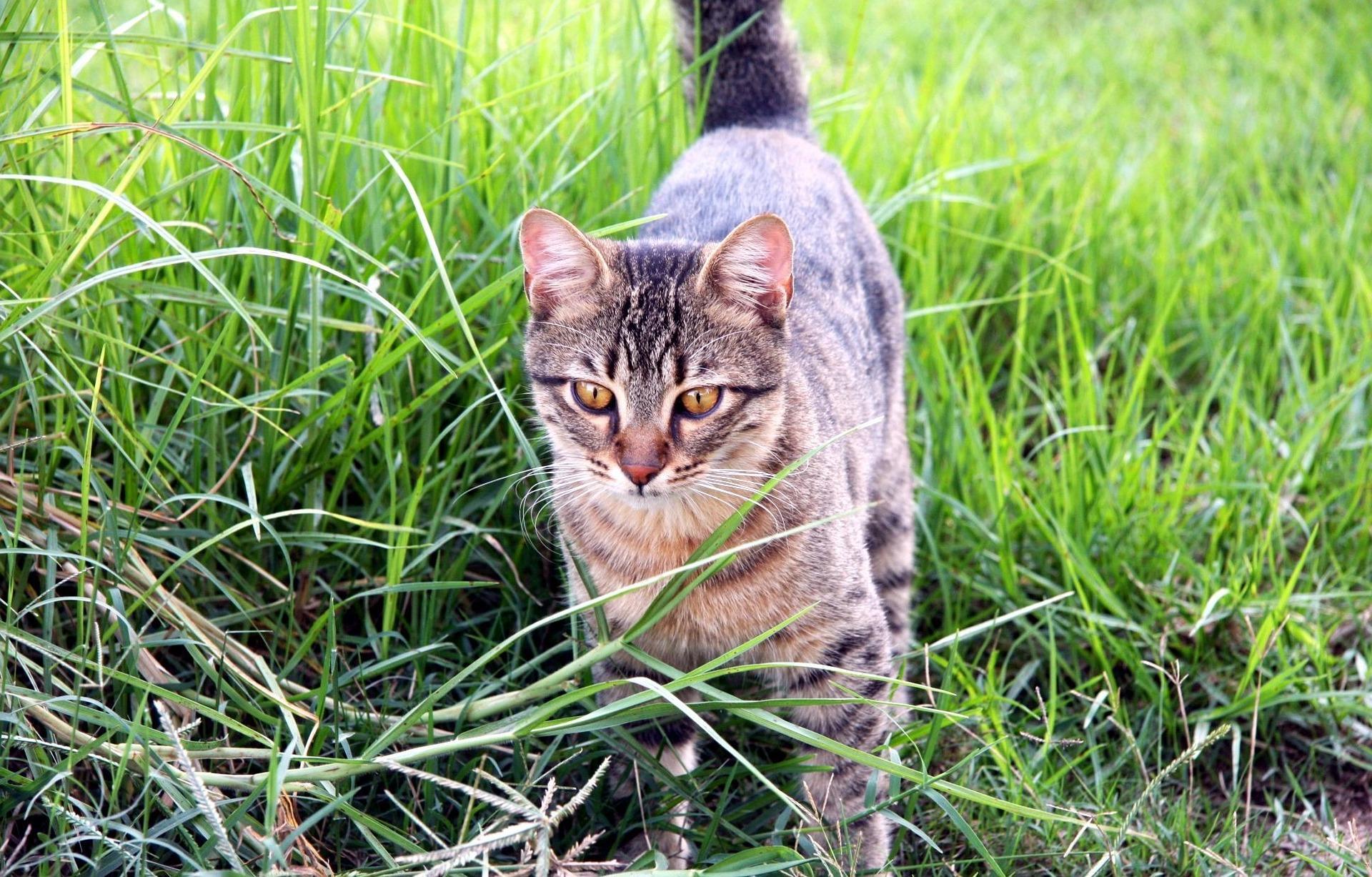 Katze markiert das Gelände