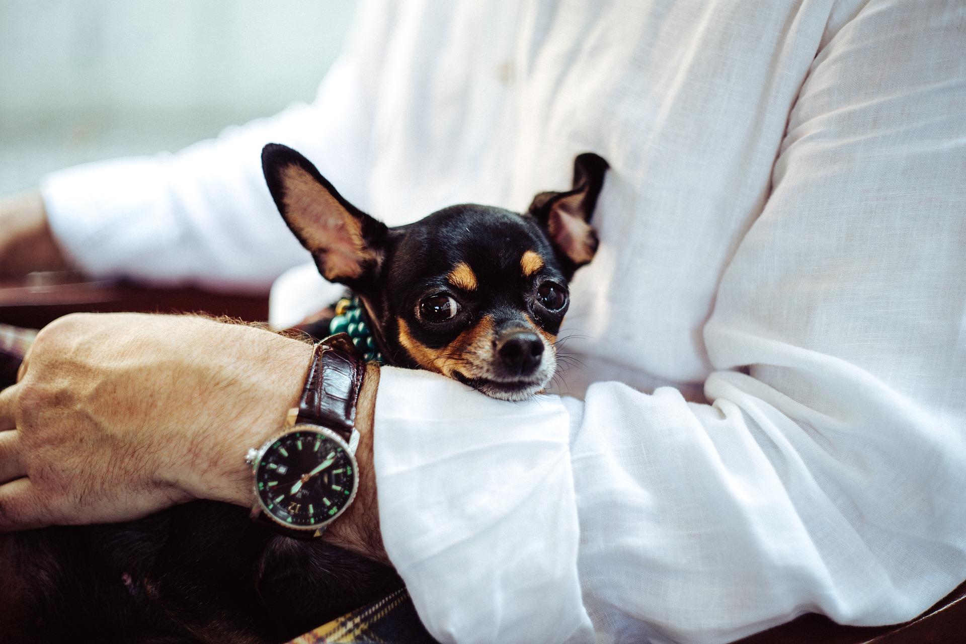 Wie misst man die Temperatur eines Hundes? Was ist die richtige Körpertemperatur für einen Hund?