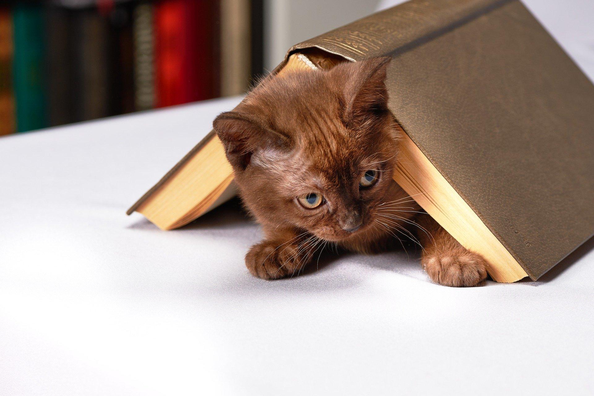 Was können Sie Ihrer Katze beibringen und wie kann man sie richtig erziehen?
