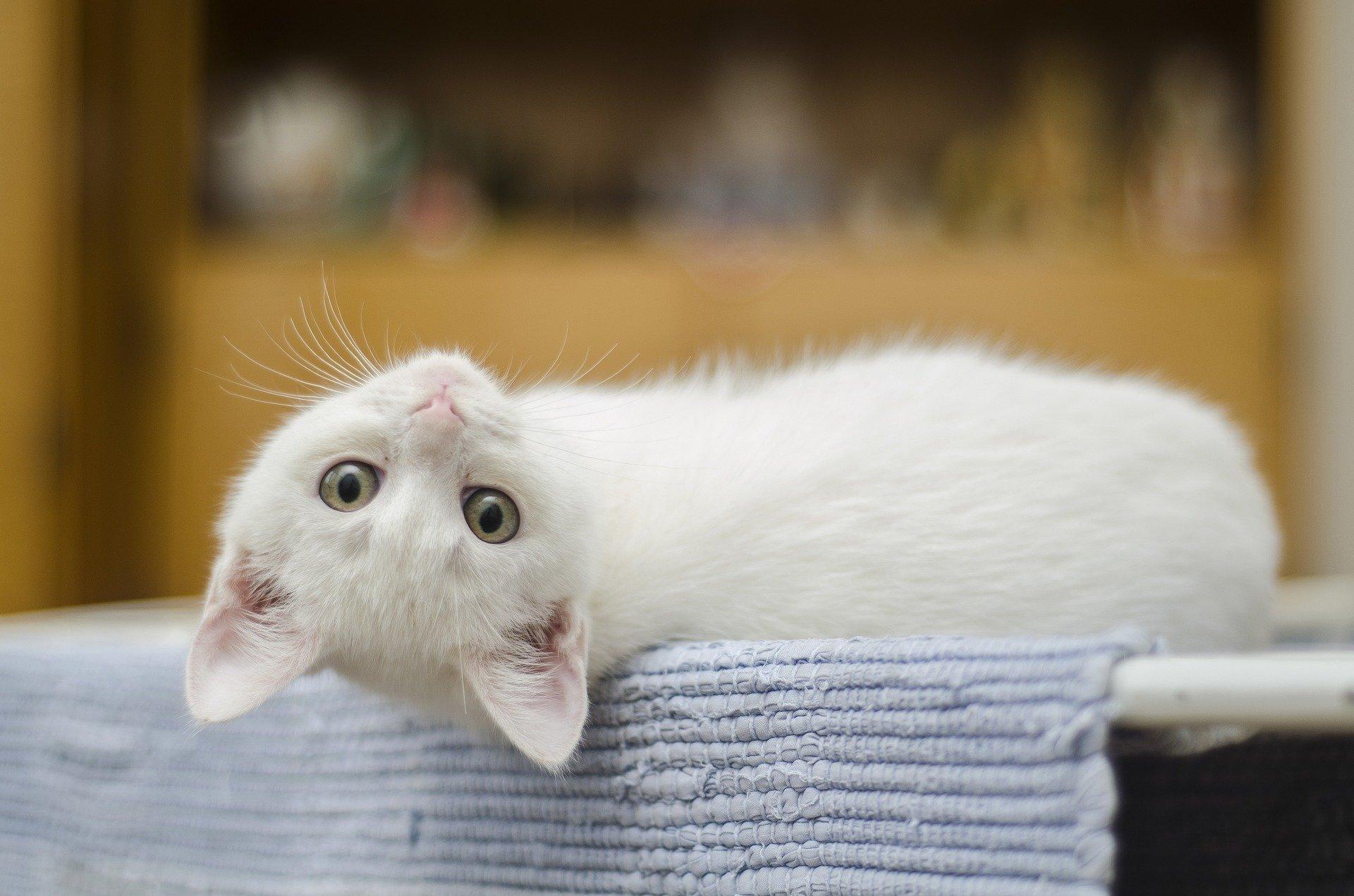 Katzenwürmer - Symptome, Ursachen. Wann und wie entwurmt man die Katze
