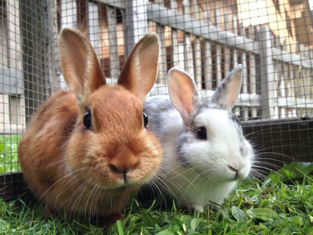Richtige Ernährung von Kaninchen