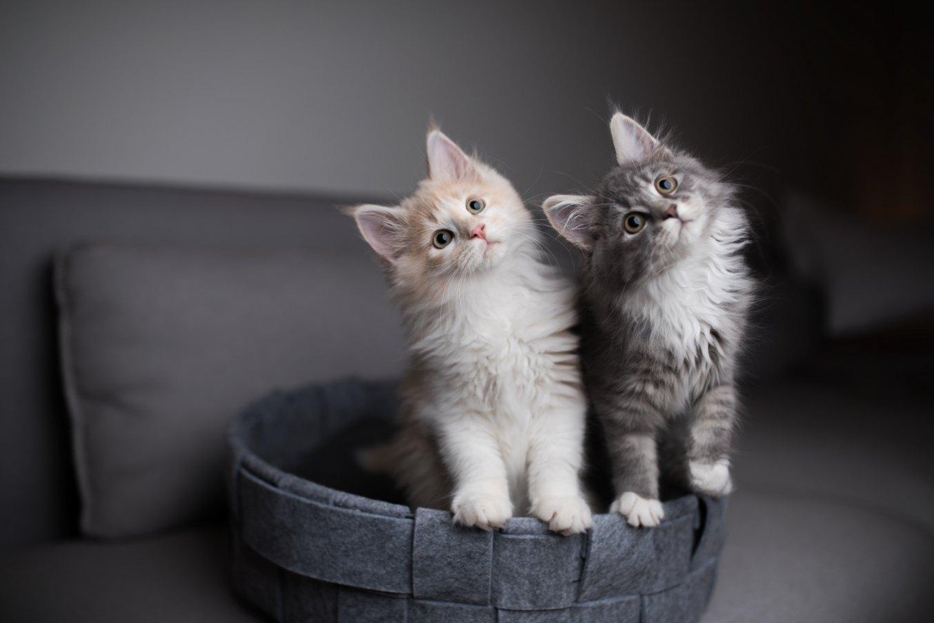 Von der Coronavirus-Epidemie sind Haustiere wie Katzen nicht betroffen.