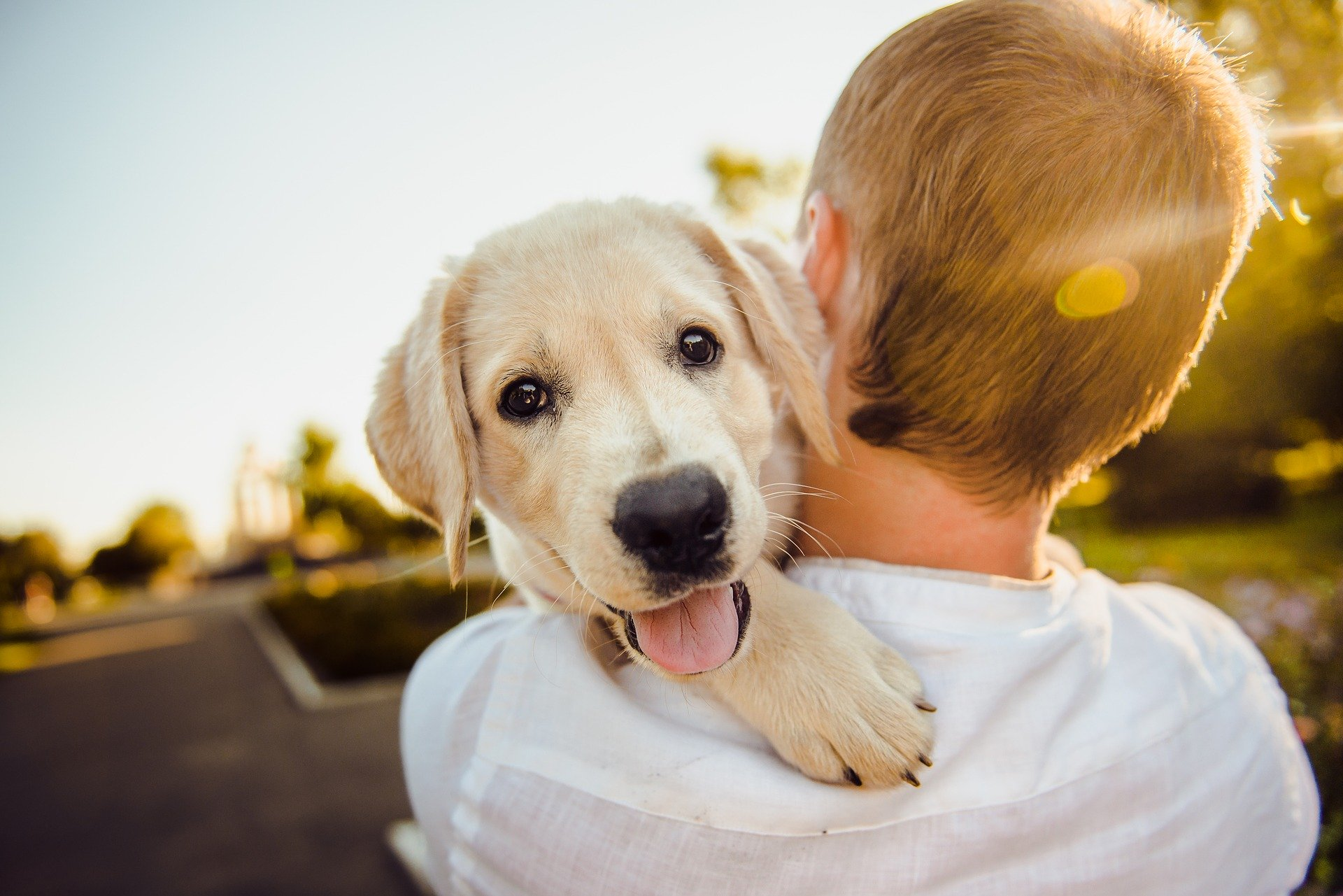 Die Aufzucht eines Hundes ist ein Prozess, der Beständigkeit und Zusammenarbeit zwischen allen Familienmitgliedern erfordert.