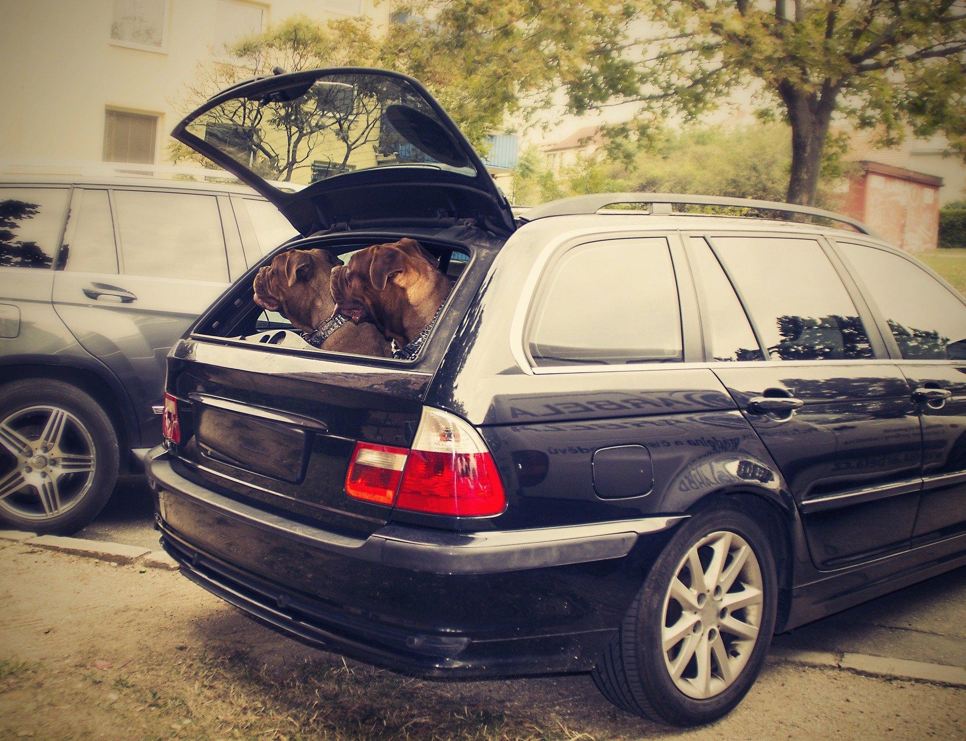 In Polen wird immer häufiger eine Hundeversicherung angeboten. Es kann vor den Auswirkungen eines Unfalls mit einem Haustier schützen.