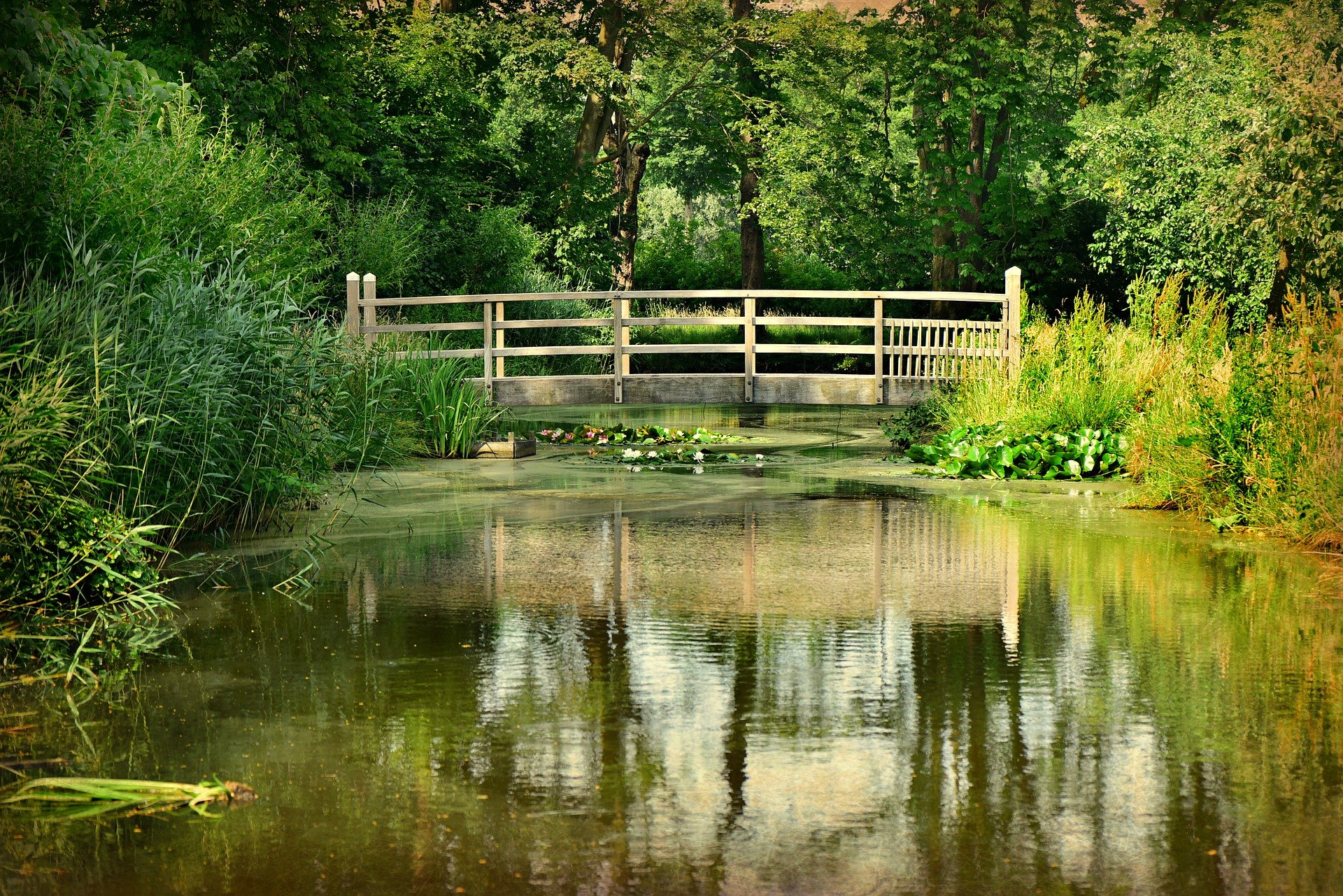 Ein Teich im Garten ist ein zeitloses dekoratives Element, besonders wenn er mit Pflanzen bepflanzt ist und Wasser aus ihm sprudelt.