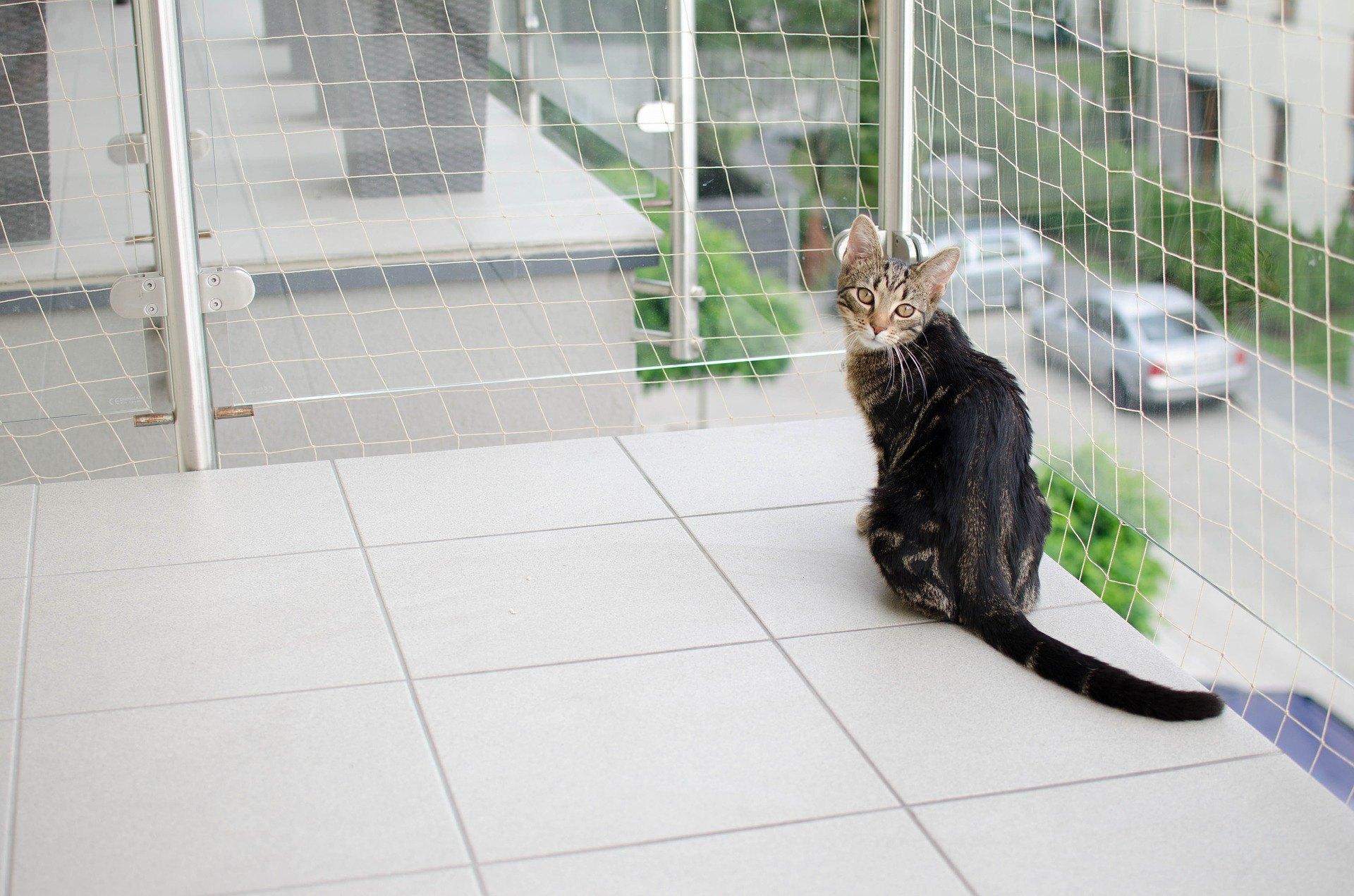 Ein Katzenbalkonnetz ist eine sehr gute Idee, um Ihre Katze vor dem Herausfallen zu schützen. Das Produkt ist in verschiedenen Farben (am häufigsten weiß, oliv, transparent, schwarz), Größen und Maschenweiten erhältlich.