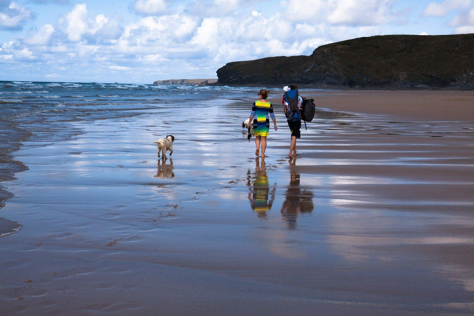 Ein Ausflug mit einem Hund ans Meer erfordert aufgrund der Sicherheit des Haustieres und des Komforts anderer Urlauber eine sorgfältige Vorbereitung.