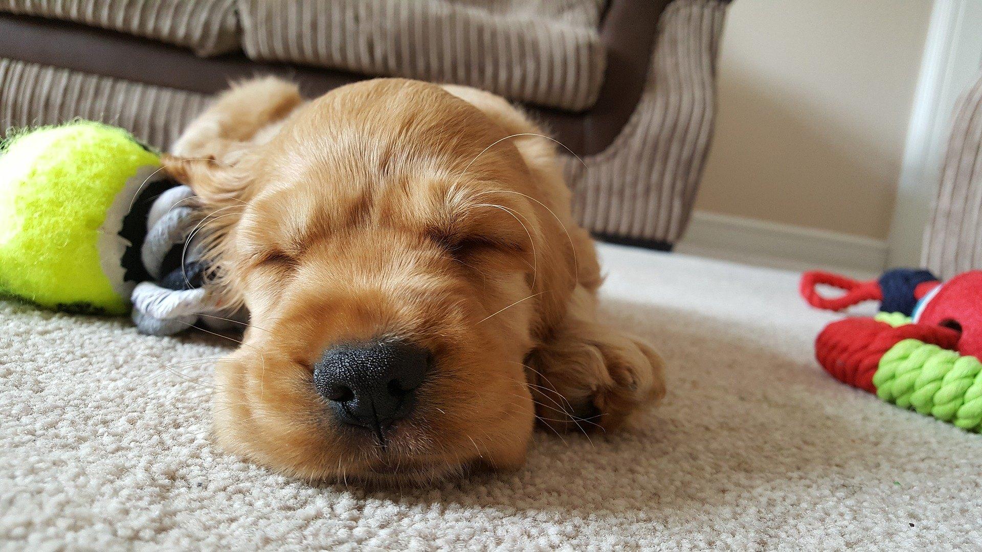 Die Vorbereitung auf das Leben mit einem Welpen ist eine Aufgabe, der sich jeder zukünftige Besitzer eines kleinen Hundes stellen muss.
