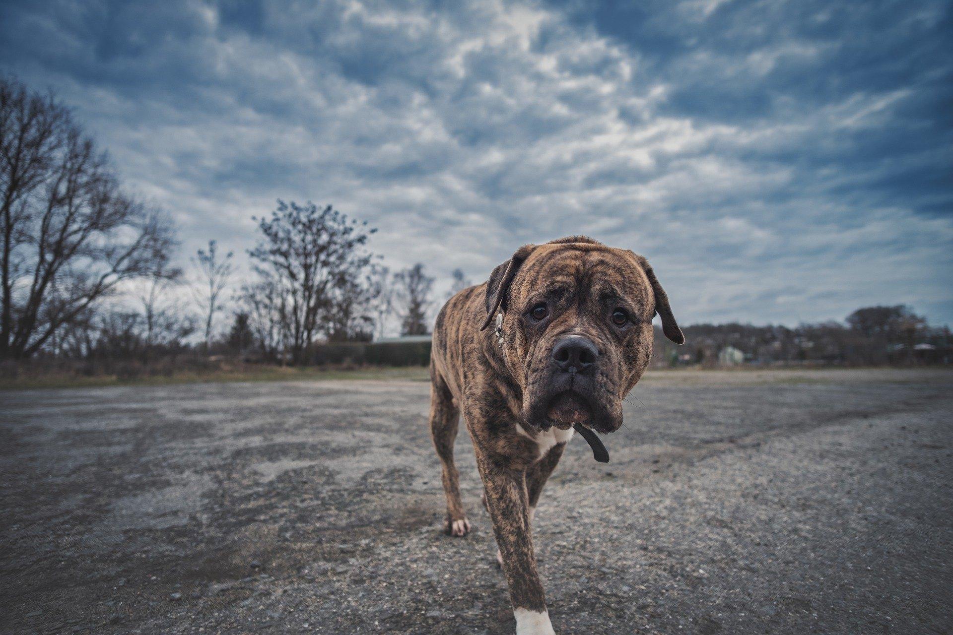 Ein Hotel für Hunde ist eine ideale Lösung, die sich während einer Geschäftsreise oder eines Urlaubs lohnt. Prüfen Sie, wie Sie den perfekten Ort für Ihr Haustier finden.