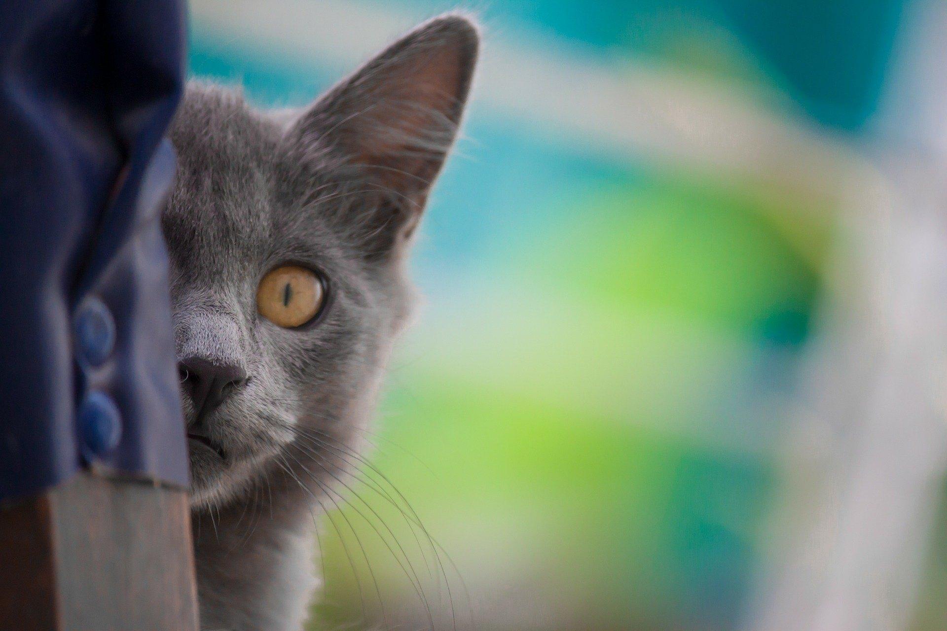 Blasenentzündung bei Hauskatzen wurde aufgrund von Ernährungsfehlern und abnehmendem Bewegungsaufwand als Zivilisationskrankheit angesehen.