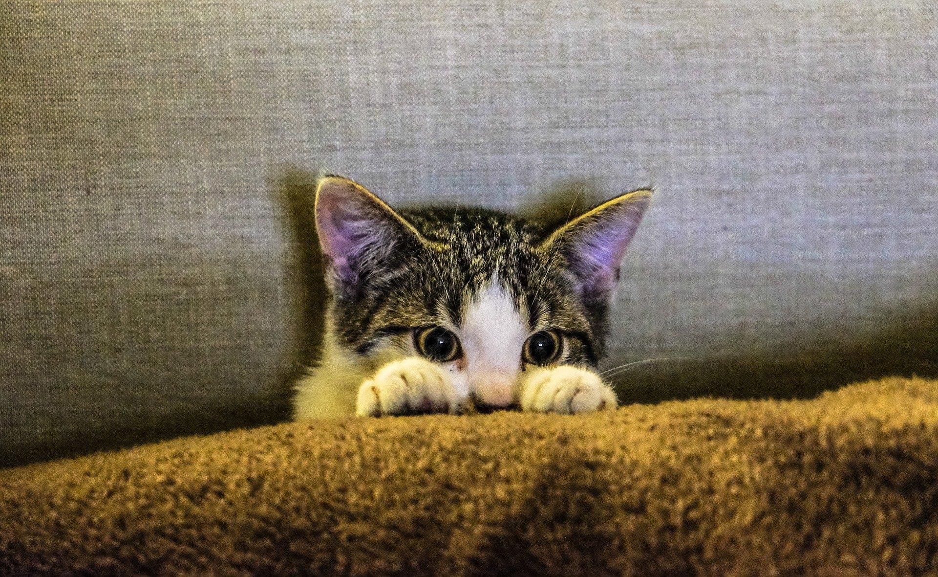 Die Sterilisation einer Katze schützt sie vor vielen Krankheiten und verringert das Phänomen der Obdachlosigkeit von Katzen.