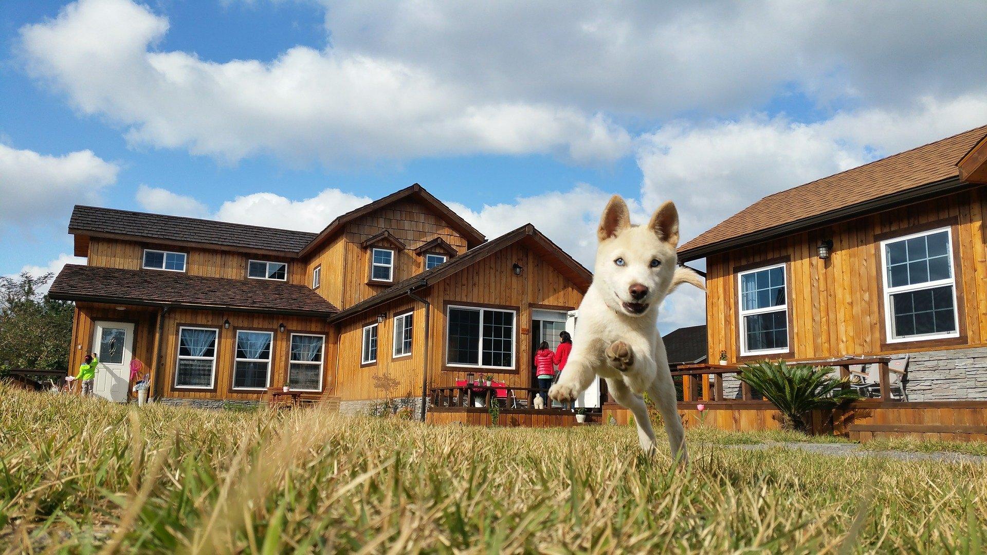 Ihr Welpe sollte auch nach entsprechender Vorbereitung nicht länger als 3-4 Stunden allein im Haus bleiben. Ein Hund als soziales Tier fühlt sich ohne Gesellschaft schlecht.