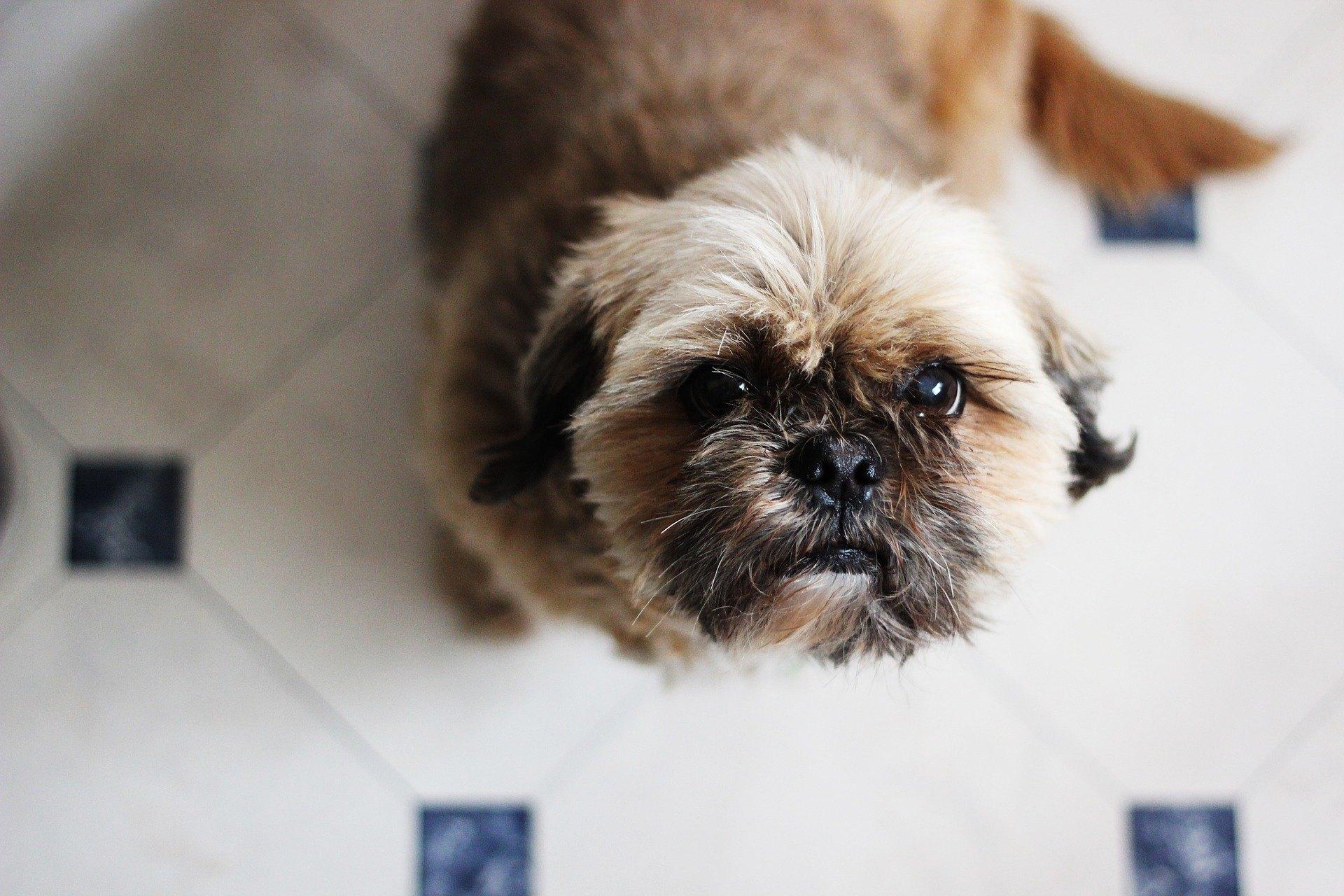 Futterwechsel bei Hund und Katze. Wie führt man ein neues Futter in die Ernährung Ihres Haustiers ein?