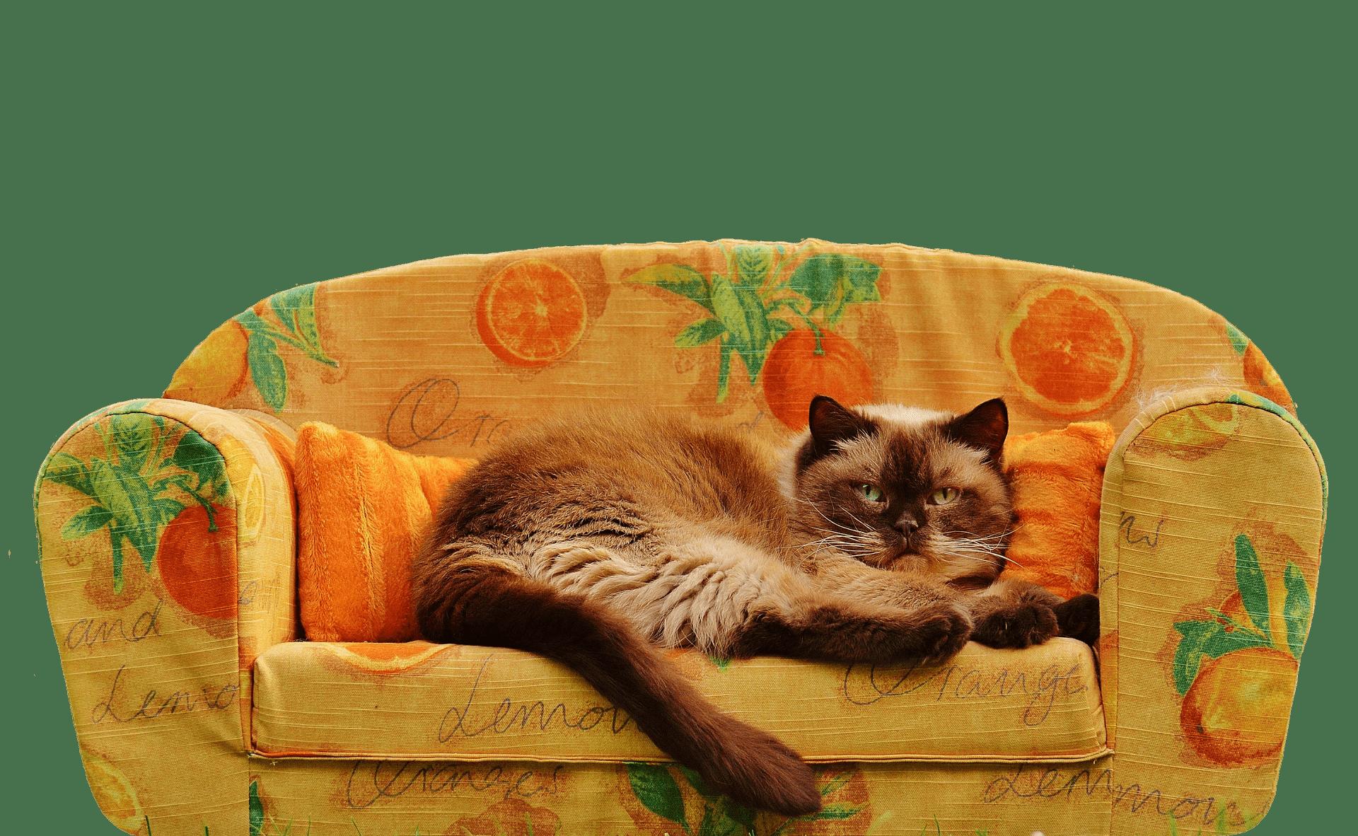 Katzenzucht kann ein profitables Geschäft sein, erfordert jedoch Leidenschaft, Engagement und einen umfassenden und verantwortungsvollen Ansatz.