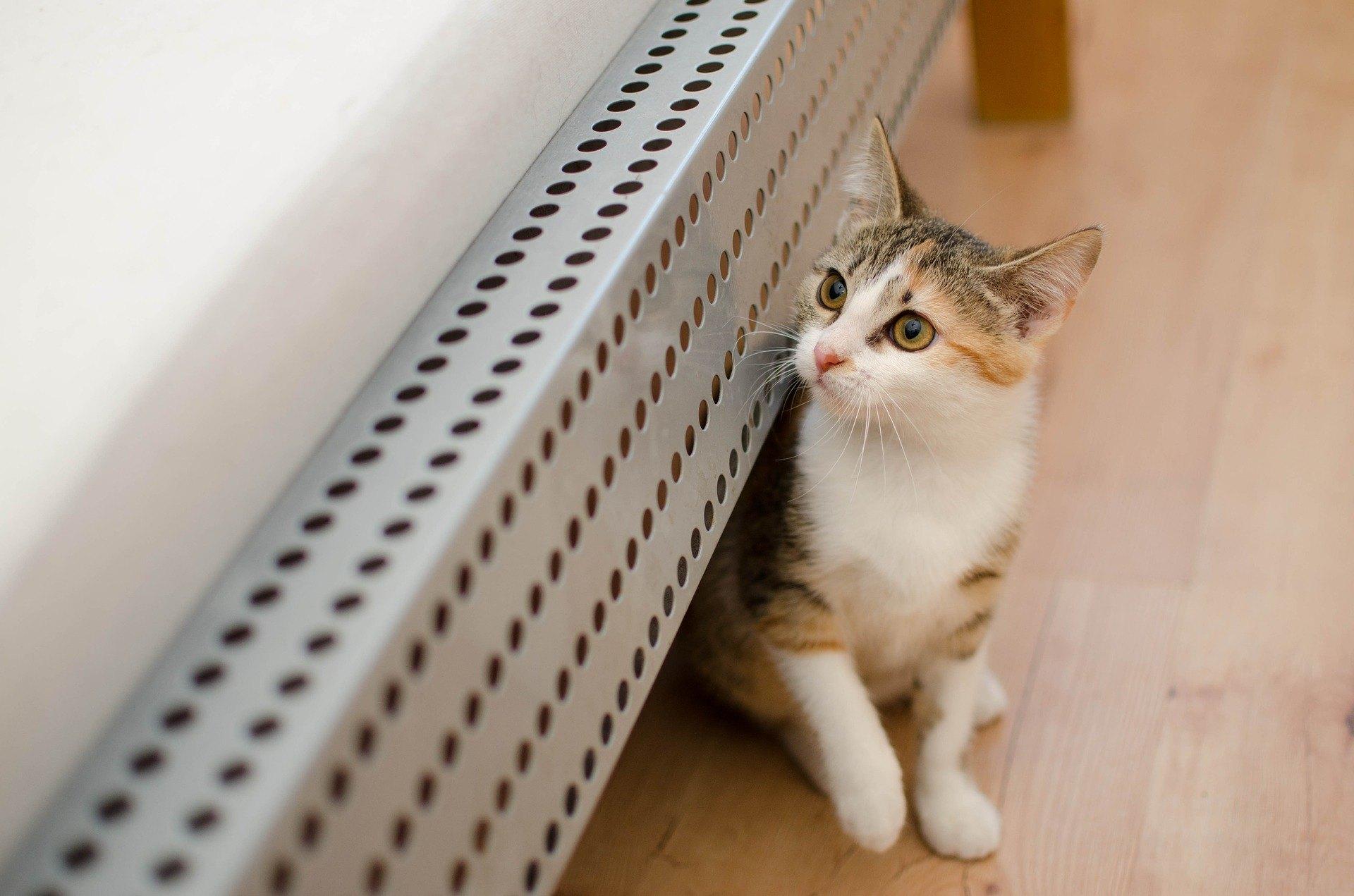 Es ist nicht leicht, der Katze eine Tablette zu verabreichen. Es ist schwer, dieses unabhängige Tier dazu zu bringen, etwas zu schlucken, was sie nicht schlucken will.