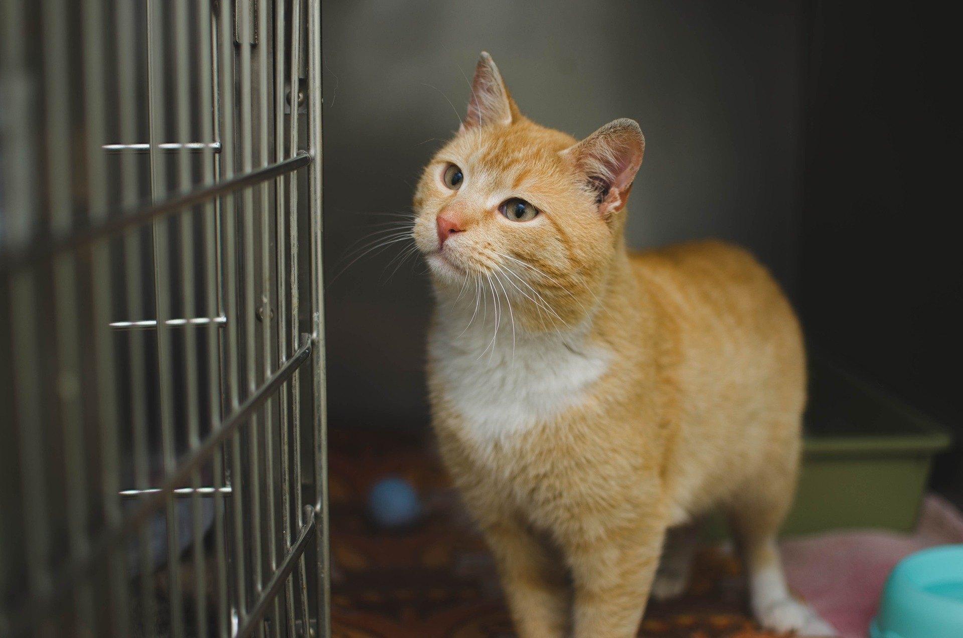 Die Impfung einer Katze ist in Polen nicht obligatorisch. Dank ihm wird das Tier jedoch viele schwere Krankheiten vermeiden.