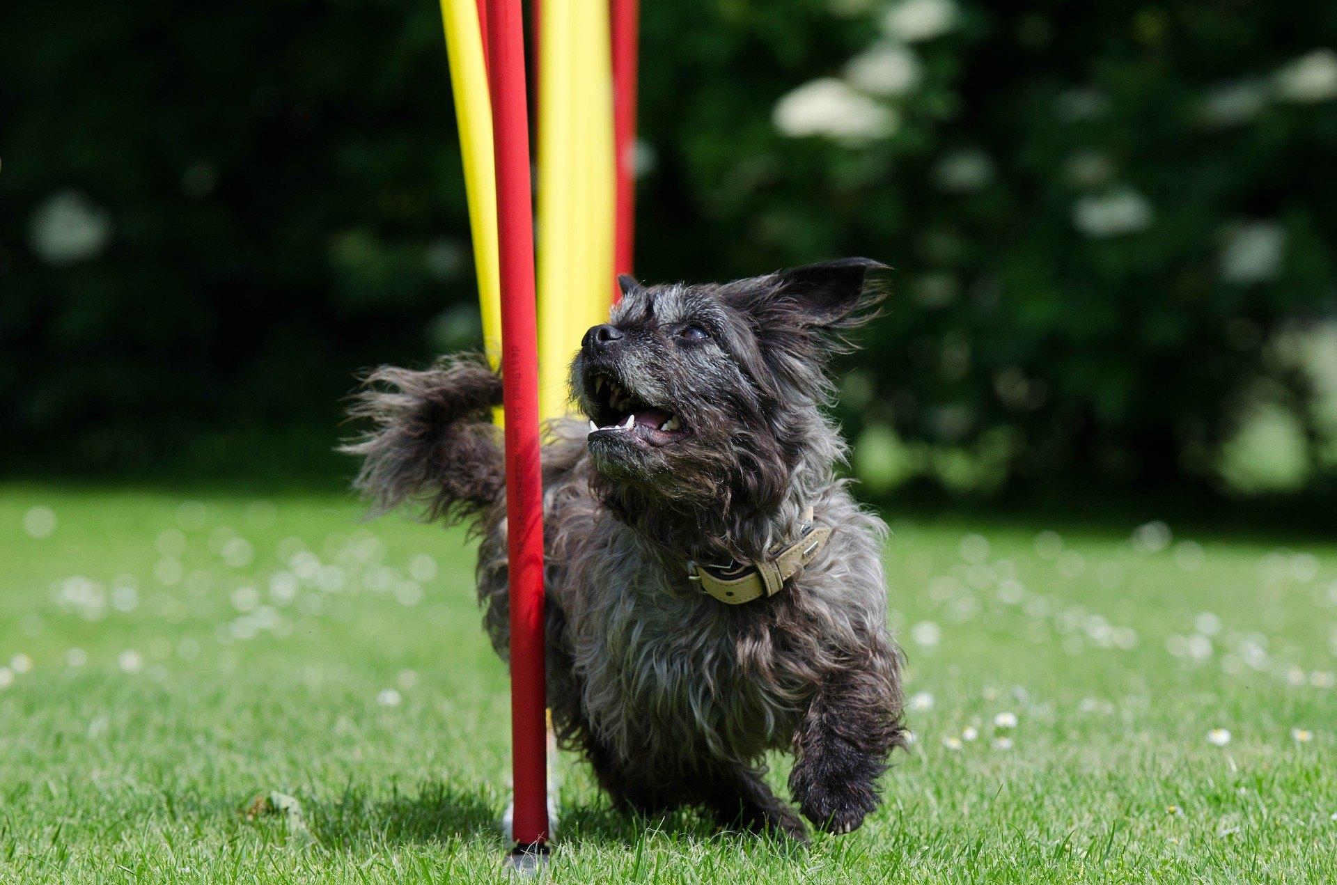 Ein Spielplatz für Hunde ist ein Ort des großen Spaßes, an dem Sie die Bindung zwischen dem Vormund und dem Tier stärken können.