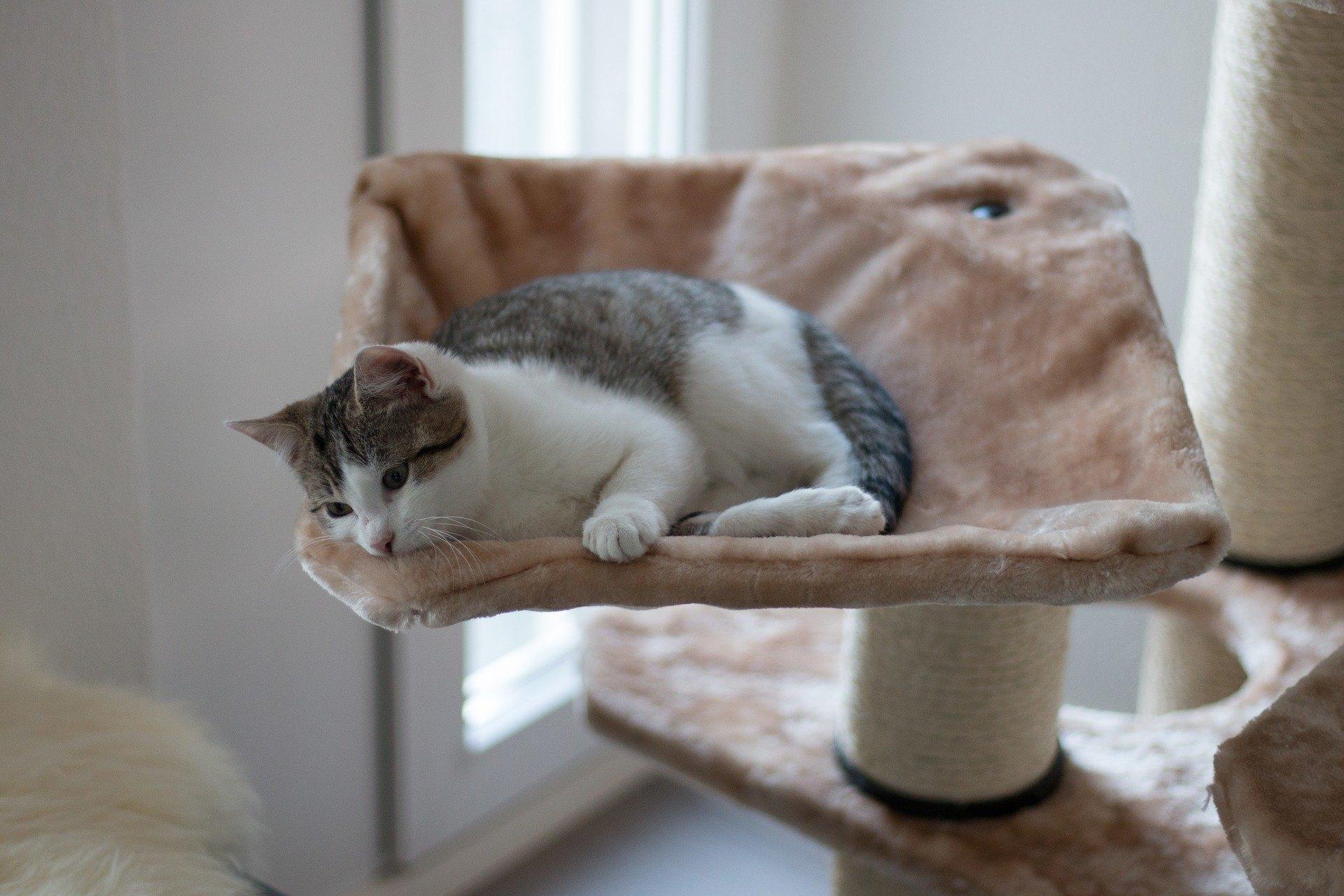 Eine Hängematte für eine Katze ist eine der am besten geeigneten Ideen für ein Versteck, da sie viele Katzenbedürfnisse erfüllt.