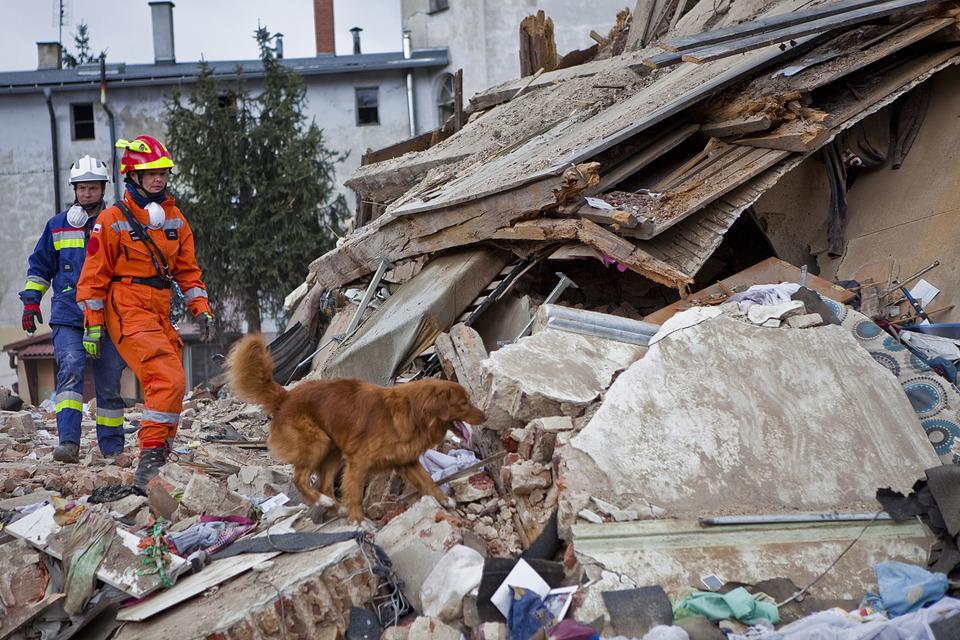 Der Hund schaut Menschen in Trümmern an.
