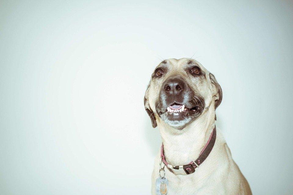 Der Name Happy kann auf die freudige Natur des Hundes verweisen.