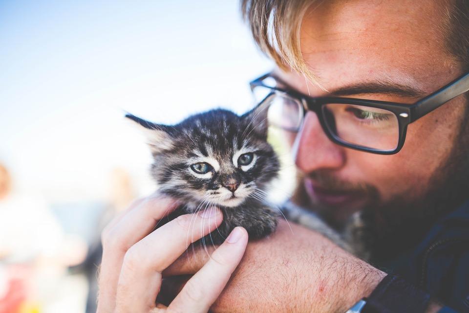 Kätzchen können je nach Zustand bereits im Alter von 4 Wochen entwurmt werden. Wenden Sie sich jedoch immer an Ihren Tierarzt.