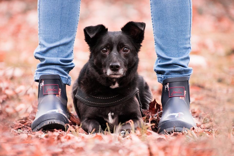 Hund zeigt Vertrauen auf viele Weise, zum Beispiel die Lust, Zeit miteinander zu verbringen und zum Beispiel zwischen den Beinen zu sitzen.