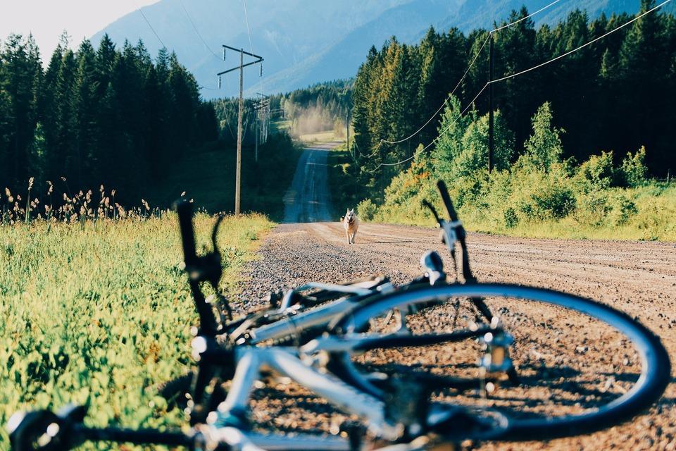 Auf dem Feldweg zwischen den Hügeln rennt ein Hund auf das Fahrrad zu.