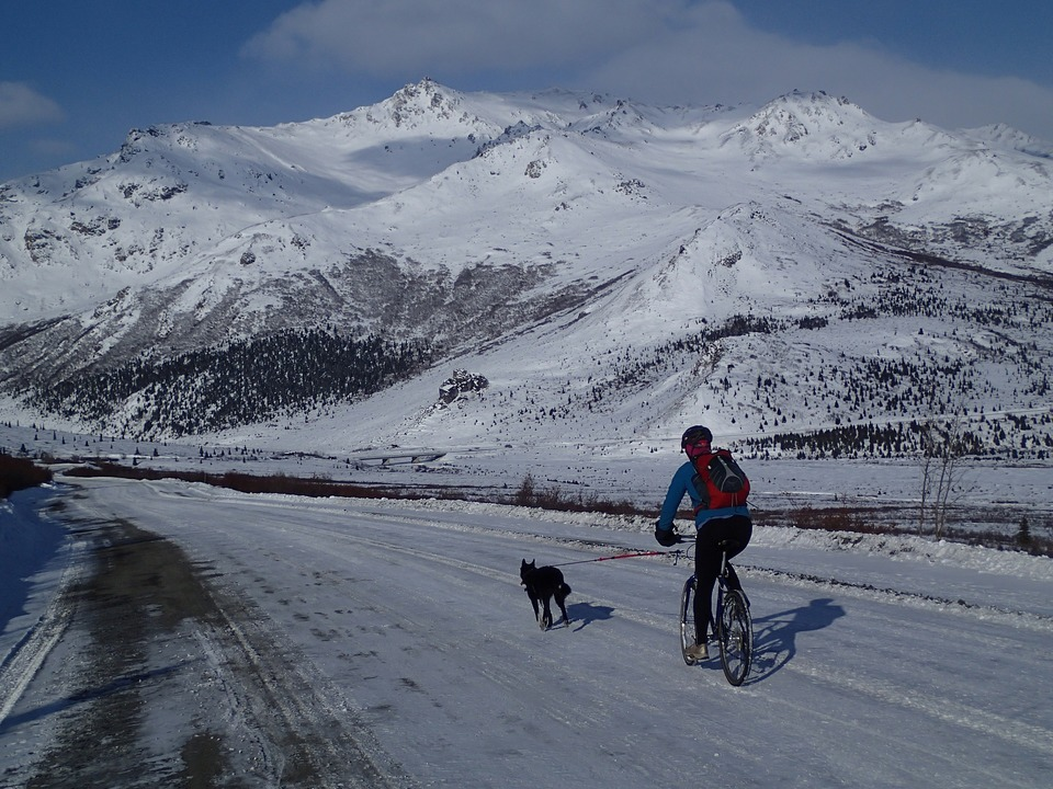 Der Hund läuft an dem Fahrrad, auf dem der Mann fährt. Die Reise ist zwischen den schneebedeckten Bergen. Radtouren mit dem Hund können auch im Winter stattfinden, wenn der Hund gut darauf vorbereitet ist.