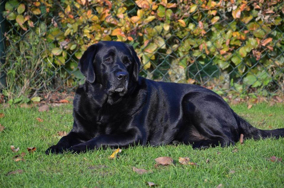 Der Zustand des Fells und der Haut Ihres Hundes ist in gewisser Weise ein Spiegelbild seiner Gesundheit.