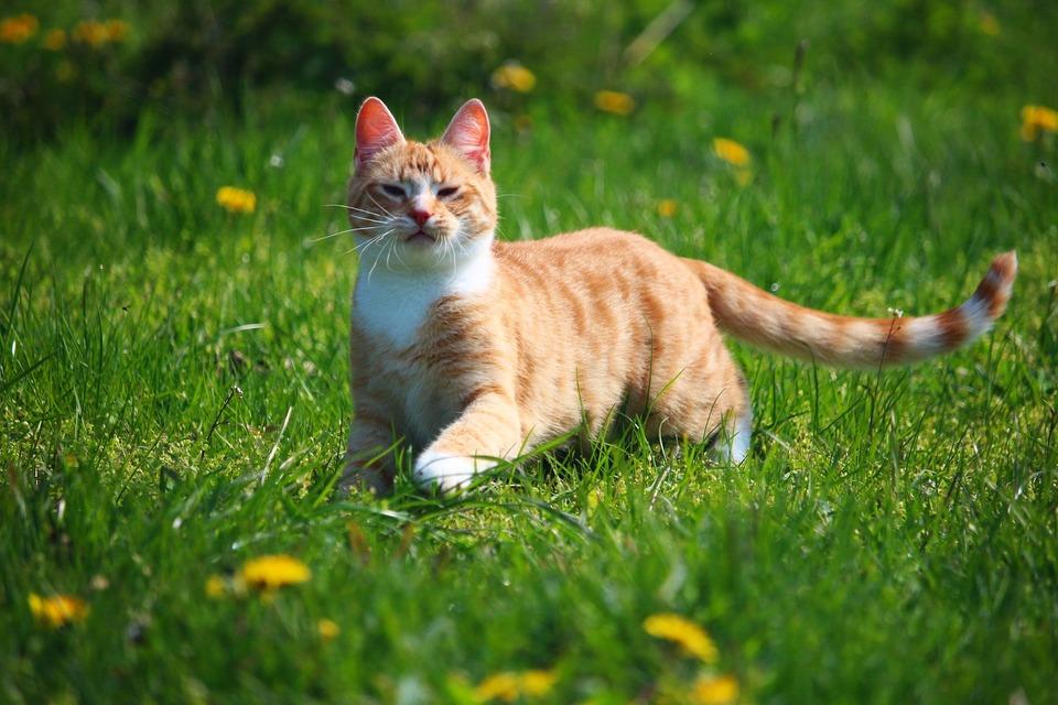 Für eine Katze, die draußen ankommt, gibt es mehr Faktoren, die Niesen verursachen können.