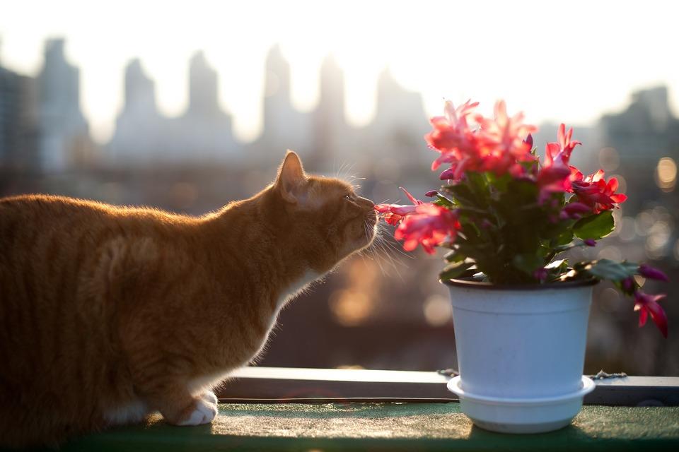 Katzenwürmer - Symptome, Ursachen. Wann und wie entwurmt..