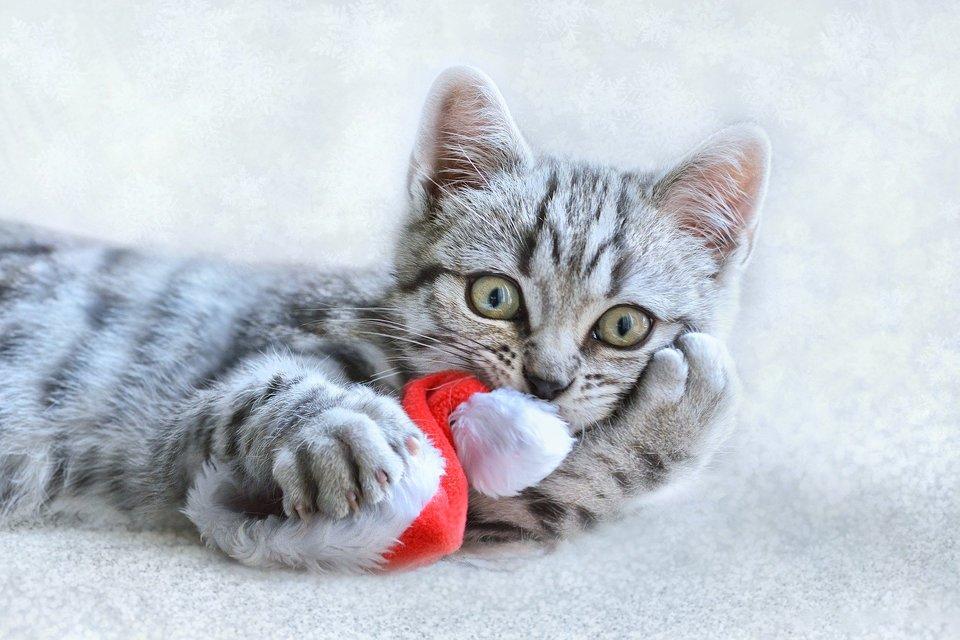 Kuscheltiere mit Catnip oder Katzenminze sind ein tolles Spielzeug für Katzen. Sie lenken die Aufmerksamkeit der Katze von Weihnachtskugeln und anderen Weihnachtsdekorationen ab.