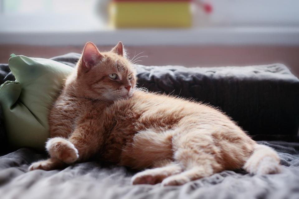 Eine traurige Katze nach unserer Abreise braucht Zeit und Verständnis, bevor sie sich an die neue Situation gewöhnt.