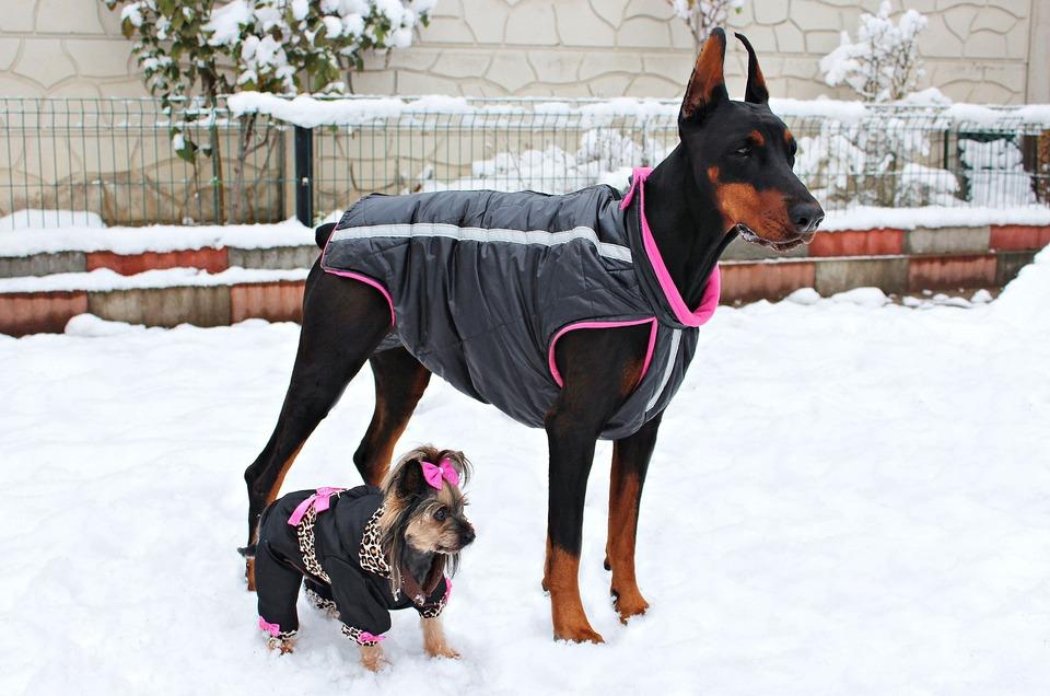 Bei Spaziergängen schütteln sie sich unter dem Einfluss von starken Regenfällen von der Kälte und Nässe. Dann erscheint es sinnvoll, Ihr Haustier zu unterstützen und es mit Schutzkleidung auszustatten.