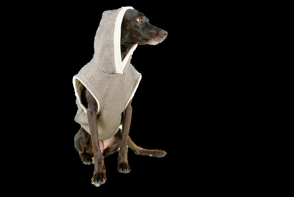 Heute bieten Marken, die Hundebekleidung entwerfen, ein viel größeres Sortiment und sorgen auch für ein ästhetisches Erscheinungsbild.