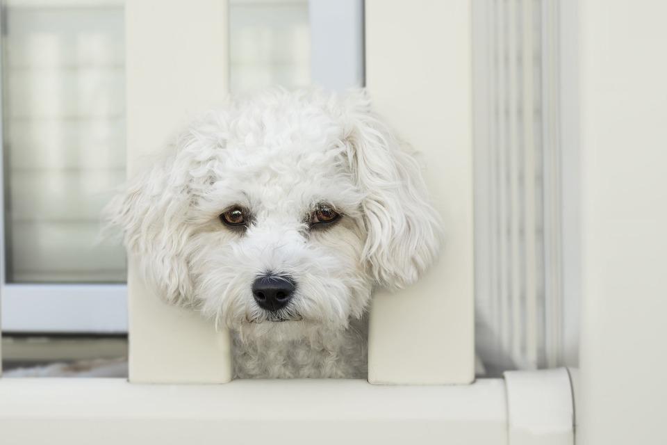 Die Ursache für Durchfall bei einem Hund ist ernste Krankheit oder Lebensmittelvergiftung.