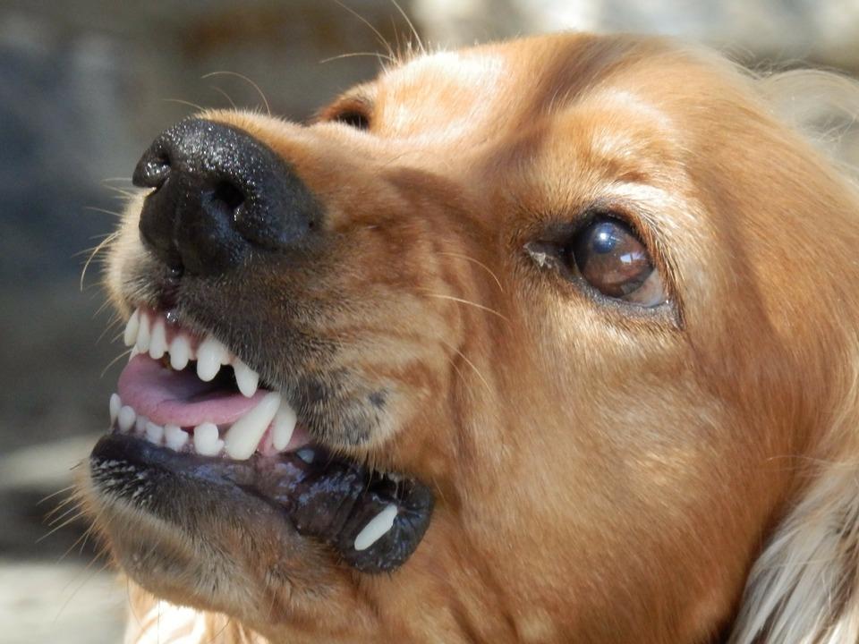 Grinsen, ungezügelte Aggression und im Endstadium auch Speichelfluss und Schaum aus dem Mund sind Symptome von Tollwut.